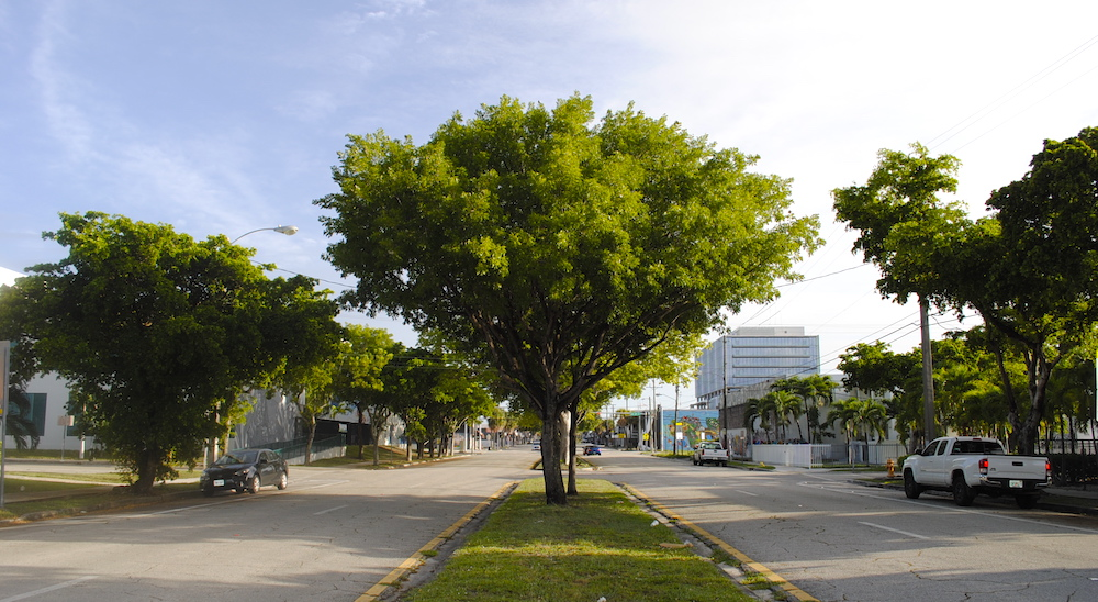 8  view of 5 ave centerline in front of wynwood five lot